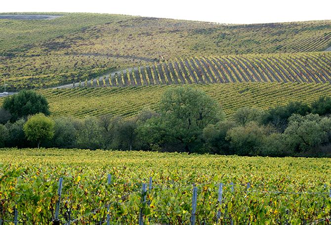Wine Spots Sonoma Coast vineyard
